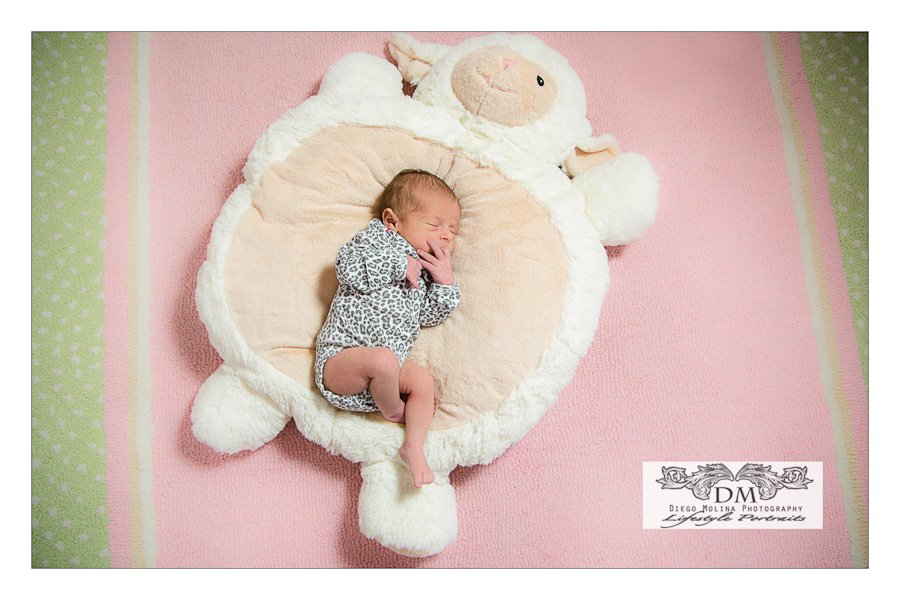 north haledon newborn photography nj